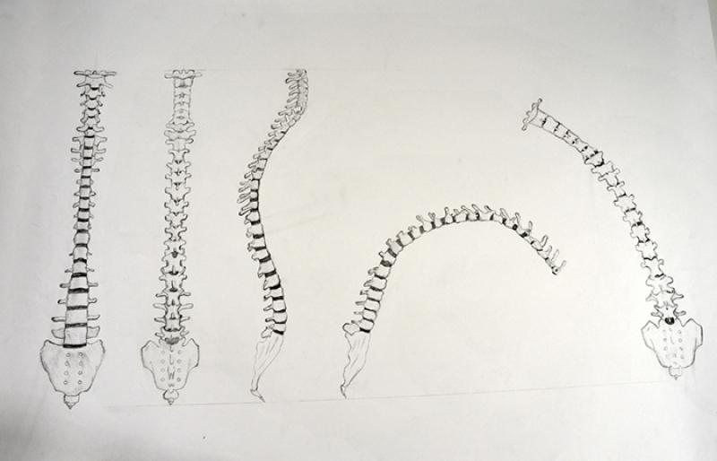 Analysing the spine structure in different positions.
