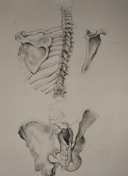 spine conceals and protects vital link between body and mind, pencil on paper. research for dress.